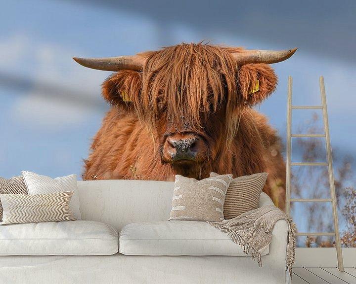 Beispiel fototapete: Schottischer Hochlandbewohner von Kitty van Helmond