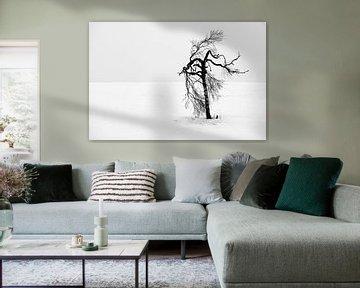 Oude boom van Sam Mannaerts Natuurfotografie