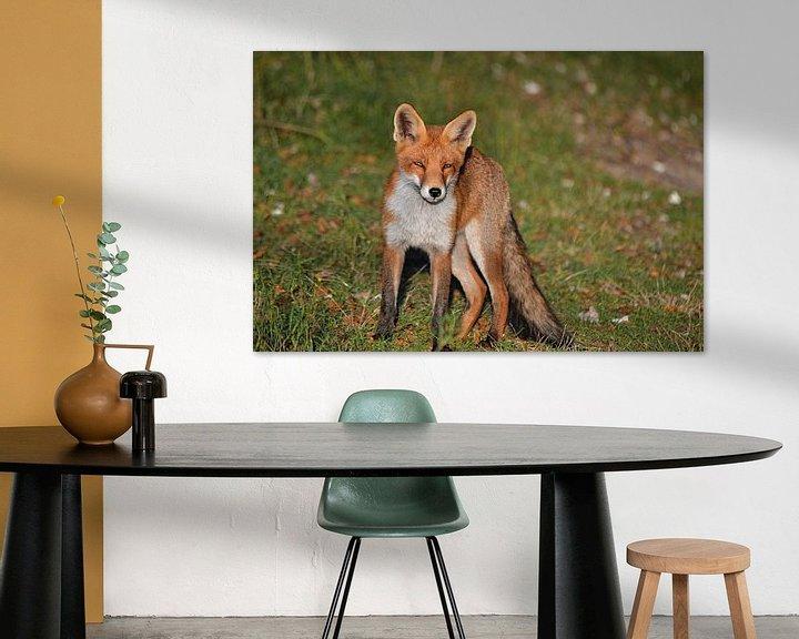 Sfeerimpressie: Een vos van JTravel