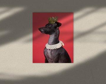 Een bruine italiaanse windhond met een kroon en een parel ketting tegen een rode achtergrond van Leoniek van der Vliet
