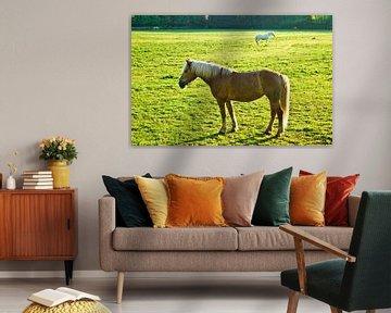 Zwei Pferde von Norbert Sülzner