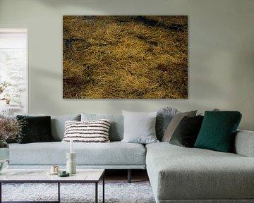 Meeresalgen-Ocker von Remke Spijkers