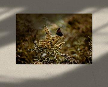Niederländische Landschaft - Nahaufnahme eines Schmetterlings von Suzanne Fotografie
