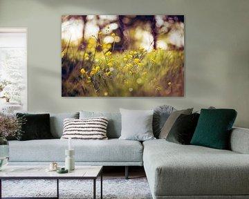 Fleurs de printemps sur Johan Rosema Fotografie