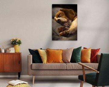 Dreaming Beagle van Nelleke Berrelkamp