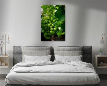 Die grüne Traube von Jesse Lamberink