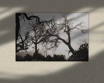 abfallende Bäume von Oscuro design