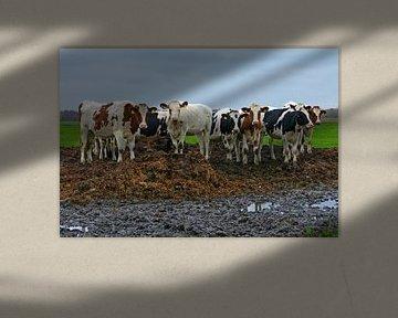 Off Site Meeting (Kühe auf Dung) von Caroline Lichthart