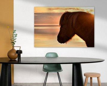 IJslands paard tijdens zonsondergang van Elisa in Iceland