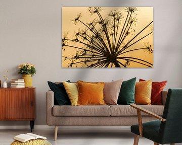 Silhouette d'une berceuse en fleur