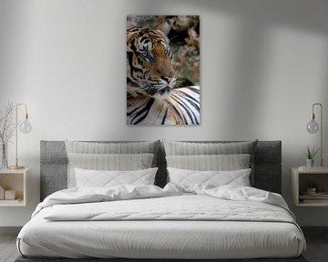 Close-up van Bengaalse tijger van Melissa Peltenburg