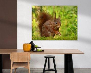 Rotes Eichhörnchen von Caroline Lichthart