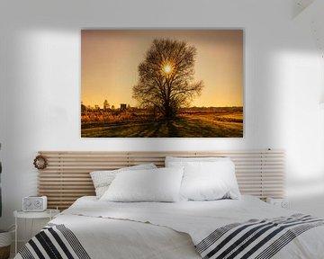 Zonsondergang direct achter een kale boom