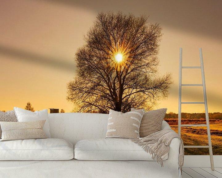 Beispiel fototapete: Sonnenuntergang direkt hinter einem kahlen Baum von Frank Herrmann
