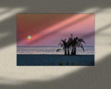 Des palmiers sur la plage de la Méditerranée au coucher du soleil
