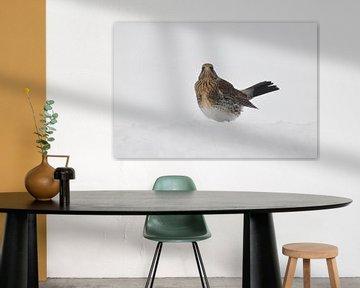 Kramsvogel / Fieldfare van Henk de Boer