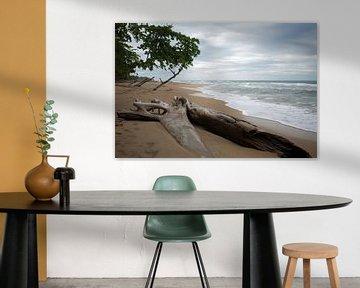 Caraïbische kust - Costa Rica van t.ART