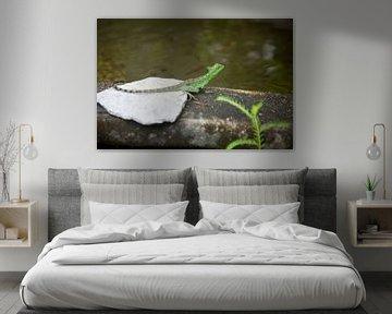 Eidechse - Costa Rica von t.ART