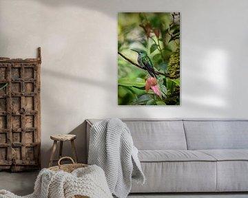 Kolibri in Costa Rica van Bianca Kramer