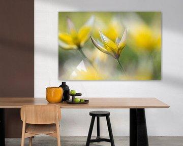 Wilde Tulpen von Kim Meijer
