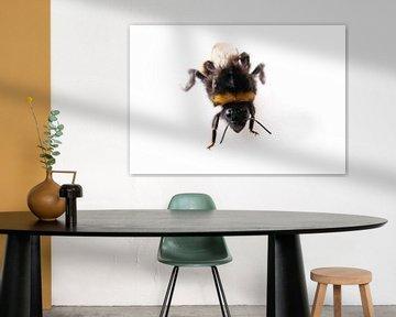 Bumblebee van BVpix