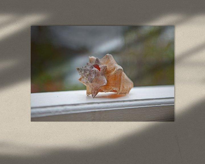 Beispiel: Schneckengehäuse - Grenada/Antillen von t.ART