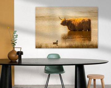Badderende  Schotse Hooglander van Arie Flokstra Natuurfotografie