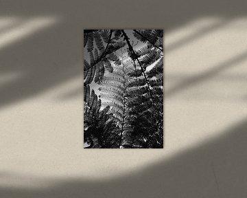 Balinesische Farne in schwarz-weißer Silhouette von Guy Houben