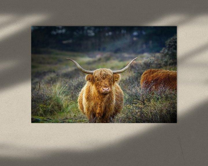 Sfeerimpressie: Schotse hooglander van Dirk van Egmond