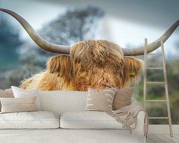 imposante Schotse hooglander van Dirk van Egmond