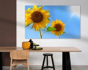 Sonnenblume von BVpix