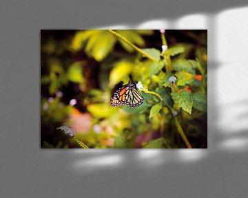 Butterfly von Jolien Somers