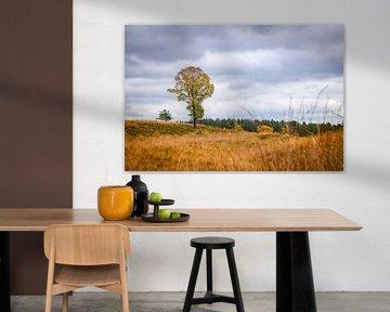 Eikenboom op de heide in de herfst in de Loenermark van Sjoerd van der Wal