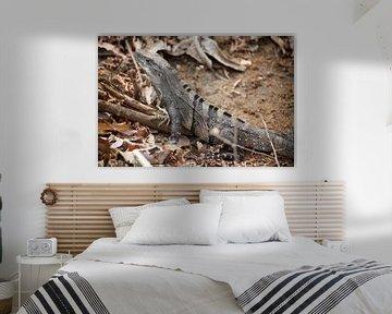 Schwarzer Leguan - Costa Rica von t.ART