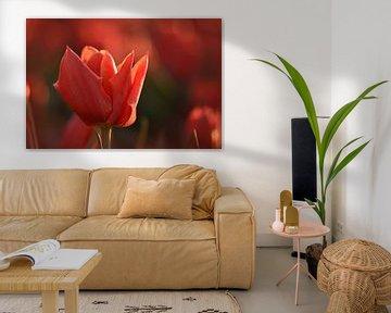 Rote Tulpe von John Leeninga
