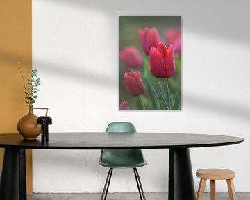 Rote Tulpe in Nahaufnahme von John Leeninga