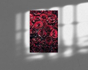 Rote Rosen von Steffen Gierok