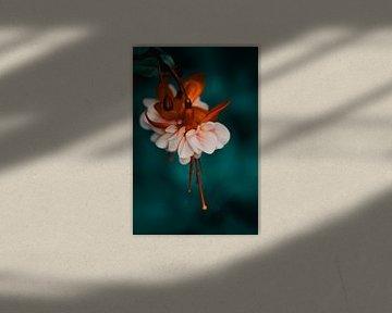 Verträumtes Fuchsia von Saskia Schotanus