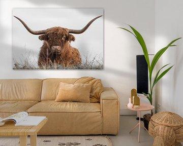 Schotse Hooglander met grote hoorns van Ans Bastiaanssen