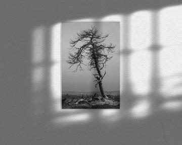 Sie war schön, so wie ein toter Baum schön sein kann... von Rik Verslype