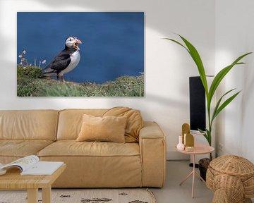 Papageientaucher von Martin van der Kruijk
