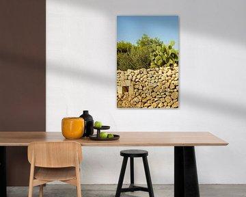 Mauer mit Kaktusfruchtpflanze von Jadzia Klimkiewicz