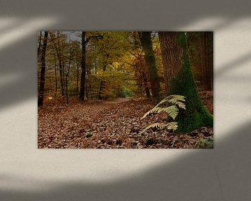 Herfstbos van John Leeninga