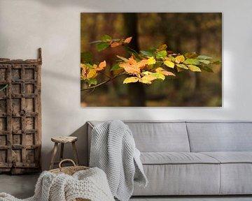 Bladeren in herfstkleuren van John Leeninga