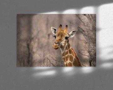 Giraffe von Martin van der Kruijk