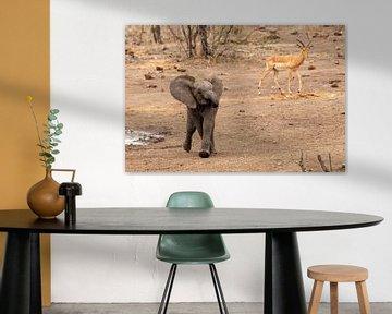 Elefantenkalb von Martin van der Kruijk