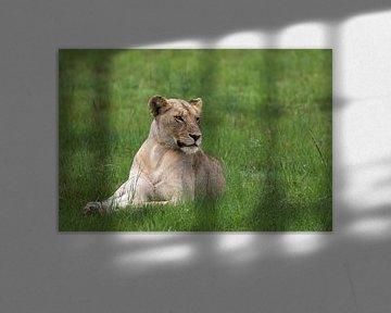 Jonge leeuwin van Martin van der Kruijk