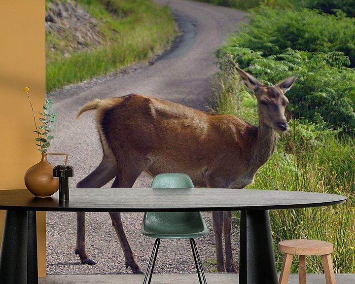 Impression: Chevreuil à Glen Etive en Ecosse. sur Babetts Bildergalerie
