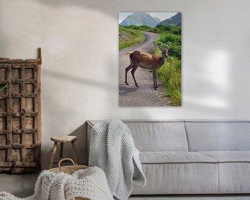 Reh im Glen Etive in Schottland. von Babetts Bildergalerie