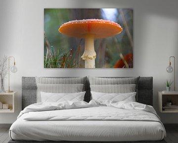prachtige paddenstoel voor een lieve kabouter